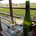 Sula Vineyards, India