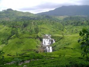 Tea Gardens in Nuwara Eliya, Sri Lanka