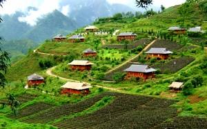 Terraced fields of Sapa, Vietnam.