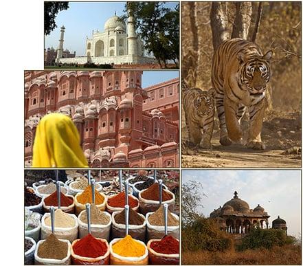 indiaTrail-mosaic.jpg