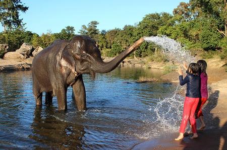 Tara, the resident elephant at Kipling Camp in Kanha National Park