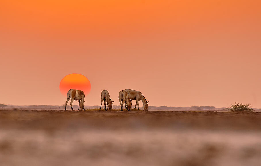 Sunset in Little Rann of Kutch, Gujarat