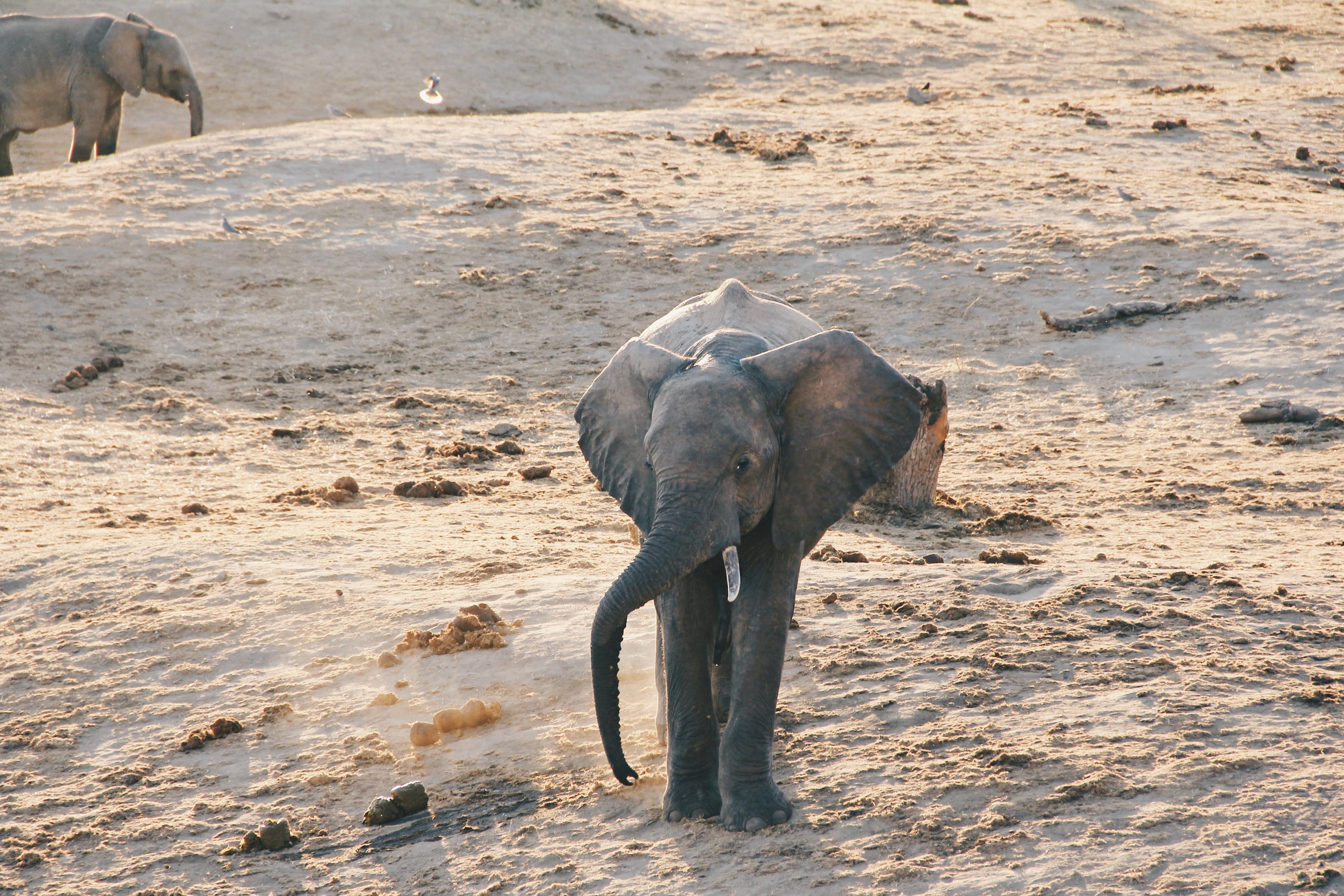 Sri-Lankan-Elephants-Sodha-Travels