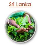 Sri_Lanka_Destination_Guide