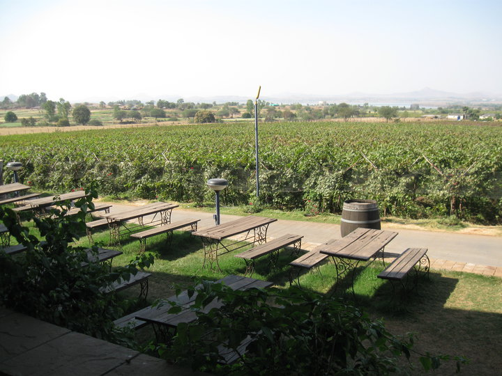 Sula Vineyard Wine Tour